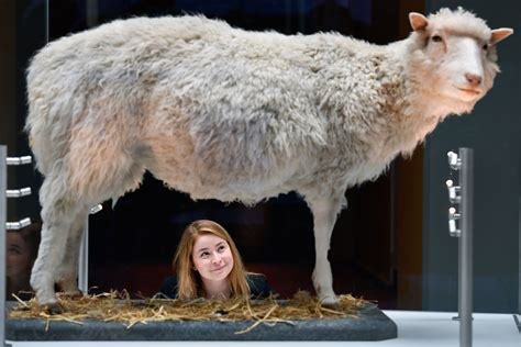 Dolly the sheep quiz: How much do you know about the world