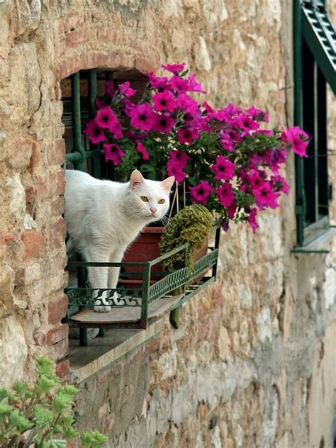 Cat Looking Out Of Window Sill | LuvBat